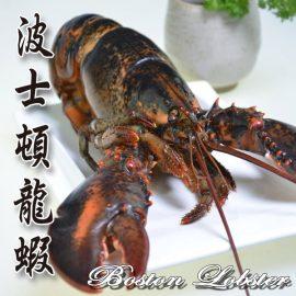 【大福嚴選】空運加拿大波士頓螯龍蝦(500G+/-5%)